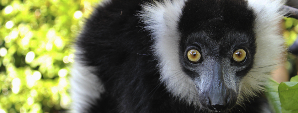 Lemure_Banner